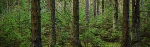 50. Yıl Kardeşlik Ormanı